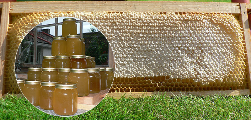 capped-and-extracted-honey